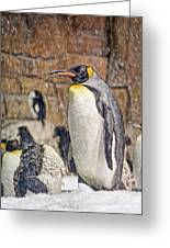 More Snow - King Penguin Greeting Card