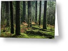 More Tree Trunks And Ferns Greeting Card