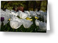 More White Tulips Greeting Card