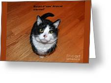 More Words From  Teddy The Ninja Cat Greeting Card