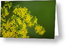 More Yellow Greeting Card