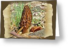 Morel Mushroom - Green Lane Pa Greeting Card