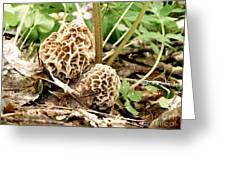 Morel Mushrooms Greeting Card