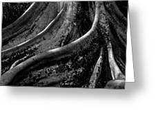 Moreton Bay Fig In Bw Greeting Card