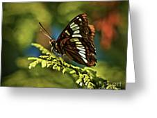 Mormon Metalmark Greeting Card
