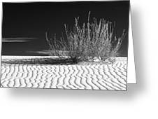 Morning At White Sands  Greeting Card