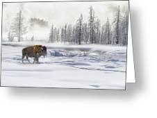 Morning Bison 4  7912-4 Greeting Card