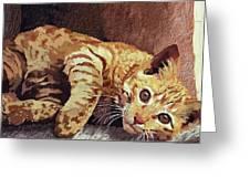 Morning Cat Greeting Card