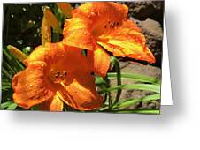 Morning Daylilies Greeting Card