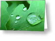 Morning Dew #2 Greeting Card