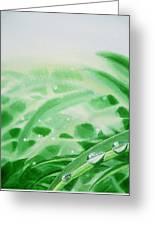 Morning Dew Drops Greeting Card