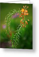 Morning Dew On Orange Flowers Greeting Card