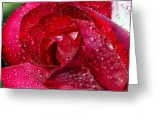 Morning Dew On Rose Greeting Card