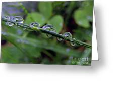 Morning Dewdrops 2 Greeting Card