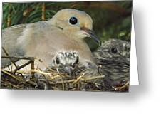 Morning Dove And Two Babys Greeting Card