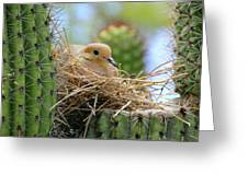 Mourning Dove Nest In A Cactus Greeting Card