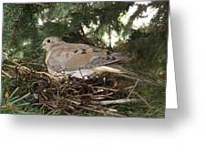 Morning Dove On Her Nest 2 Greeting Card