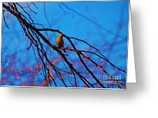 Morning Finch Greeting Card