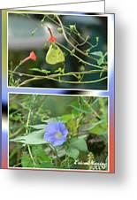 Morning Glories And Butterfly Greeting Card