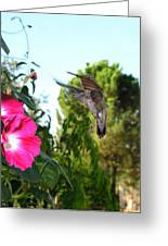 Morning Glories And Humming Bird Greeting Card