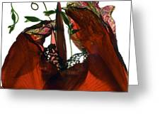 Morning Glory Canna Red Greeting Card