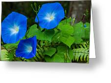 Morning Glory Family Greeting Card