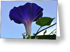 Morning Glory Sky Greeting Card