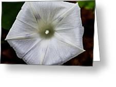 Morning Glory White Greeting Card