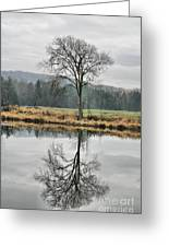 Morning Haze And Reflections Greeting Card