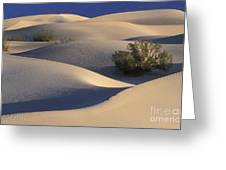Morning In Death Valley Dunes Greeting Card