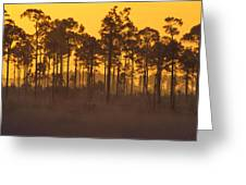 Morning In Mahogany Hammock Greeting Card