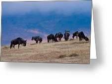 Morning In Ngorongoro Crater Greeting Card