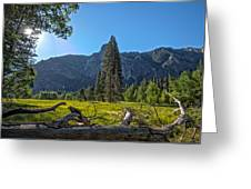Morning In The Meadow Greeting Card