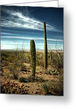 Morning In The Sonoran Desert Greeting Card