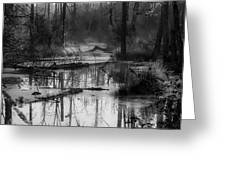 Morning In The Swamp Greeting Card