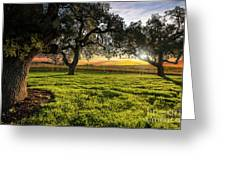 Morning In Wine Country Greeting Card