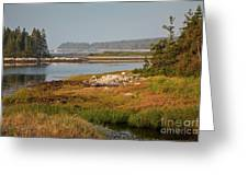 Morning Light At Schoodic  Greeting Card