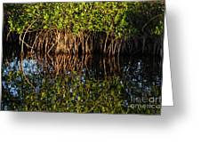 Morning Light Mangrove Reflection Greeting Card