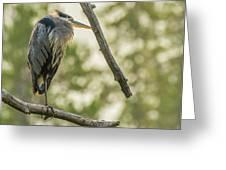 Morning Light On Great Blue Heron Greeting Card