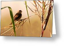 Morning Light Warbler Greeting Card