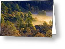 Morning Mist In The Trossachs Greeting Card
