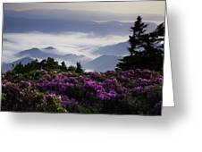 Morning On Grassy Ridge Bald Greeting Card