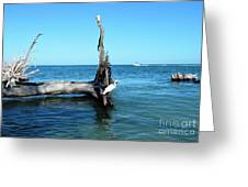 Morning On Longboat Key Greeting Card