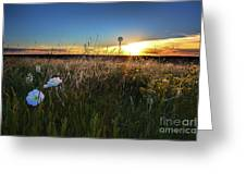Morning On The Grasslands Greeting Card