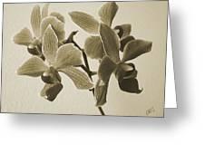 Morning Orchid Greeting Card by Ben and Raisa Gertsberg