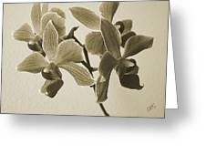 Morning Orchid Greeting Card