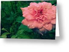 Morning Rose Greeting Card