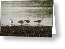 Morning Seagulls Greeting Card