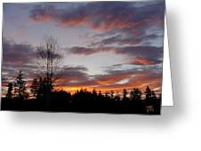 Morning Silhouetted - 1 Greeting Card