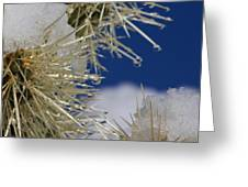 Morning Snow On Cactus Spines #1 Greeting Card